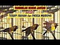 Langsung Nyaut Panggilan Burung Sogok Ontong Jantan Sogok Ontong Gacor Memanggil Lawan  Mp3 - Mp4 Download