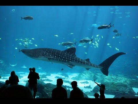 Image Result For Atlanta Aquarium