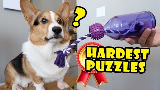 Smart CORGI Breed On HARDEST DOG PUZZLES Pt. 2 || Extra After College