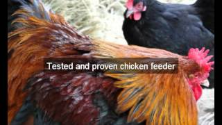 Chicken feeders | Glenn | CA | automatic chicken feeder | feeding chickens | poultry feeders |hens