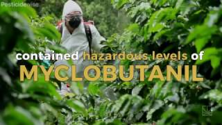 How Dangerous Are Pesticides to Cannabis Users?