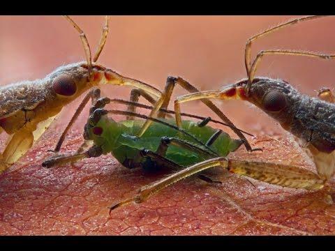 Удивительный микромир: жизнь под микроскопом #2 - Amazing Microcosm: Life Under A Microscope #2