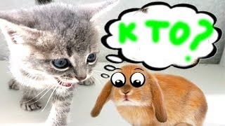Встреча Котенка МАКСА и Кролика БАФФИ  Видео для детей
