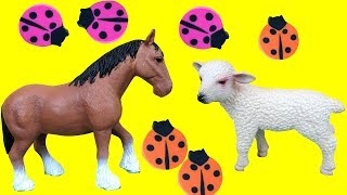 BABY HORSE & SHEEP PLAY IN FLOWER GARDEN - collecting ladybugs - hide-and-seek - sorting by color