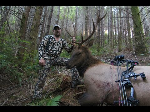 ROOSEVELT ELK HUNTING IN OREGON WITH BOW