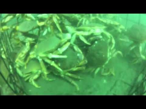 Crabbing in Victoria