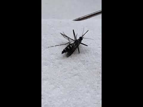 Killing Asian tiger mosquito