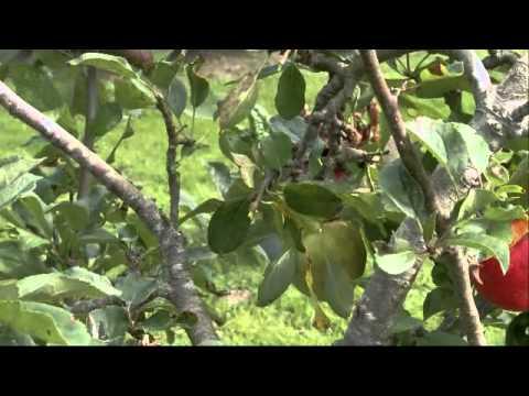 Documentary  James Nesbitt's Ireland  S01E01