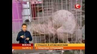 Чупакабра напала в зоопарке