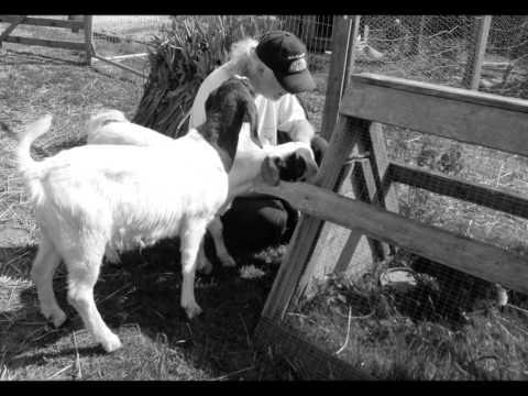 Jollity Farm by Maria Daines