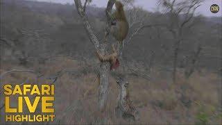 War In The Wild: Leopard Vs Hyena