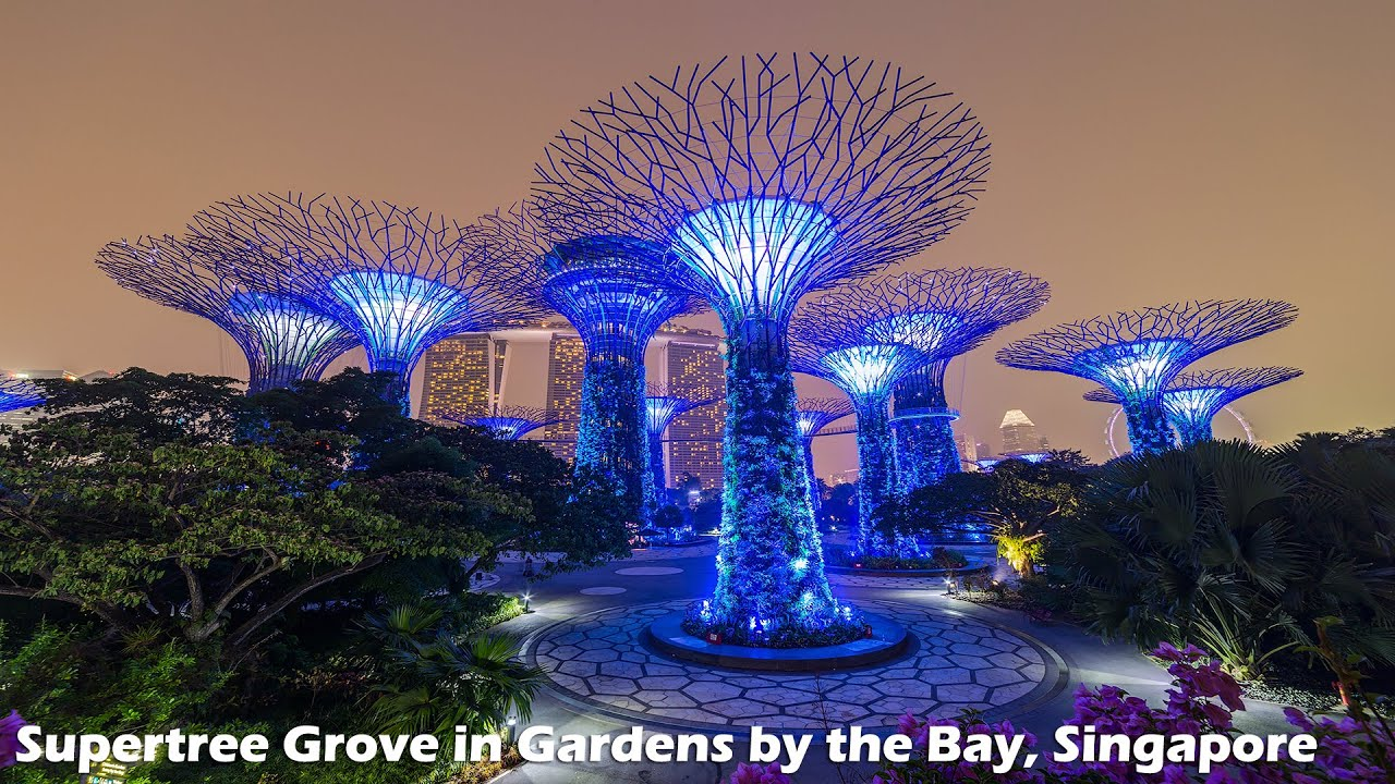 Light show at supertree grove in gardens by the bay singapore - Garden by the bay flower show ...