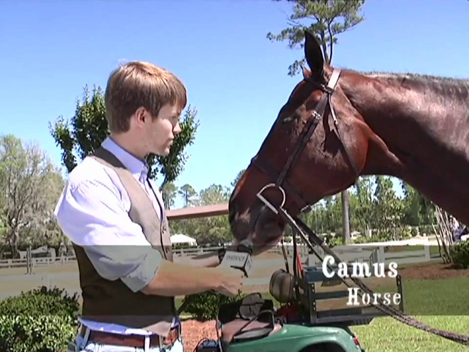Scad Equestrian Horses And Beauty At The Anrc Equitation