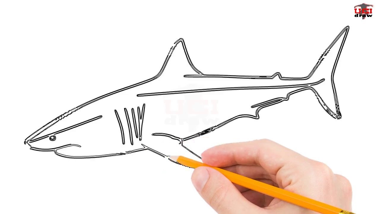How To Draw A Great White Shark Step By Step Easy For Kids Simple