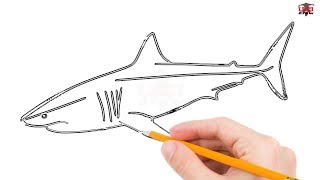shark draw drawing drawings step easy sharks simple basic clipartmag megalodon