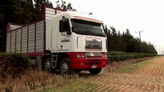 Trucking in New Zealand - the silage crew - www.truckingfantastic.com