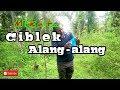 Memikat Ciblek Alang Alang Nyecret(.mp3 .mp4) Mp3 - Mp4 Download