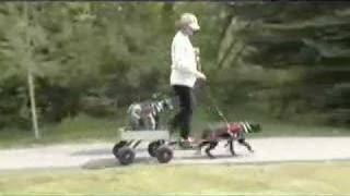 Cocker Spaniel Pulls Wagon With Poodles Riding