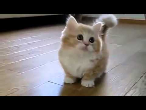 Cute Fat Kitty 61