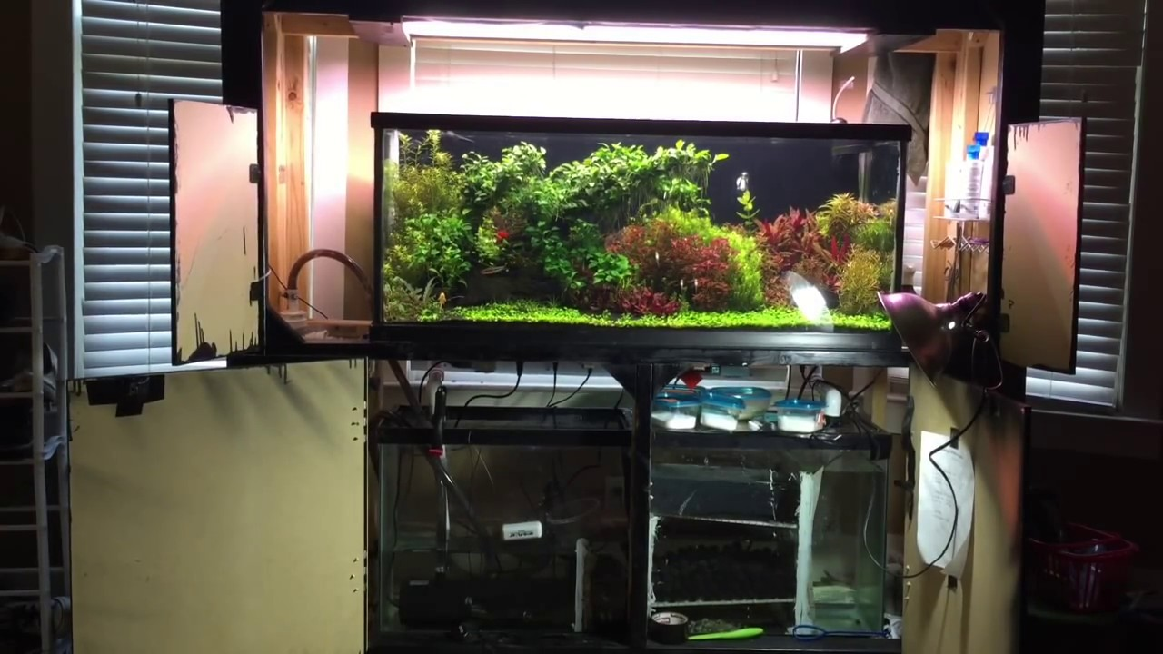 Overall Set Up Of A Planted Tank 75g With Sump And Co2