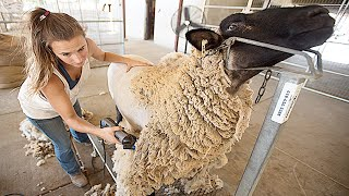 Amazing Modern Automatic Sheep Farming Technology - Fastest Shearing, Cleaning and Milking Machines