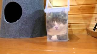 スリムなプラケースで寛ぐねこ2。-Maru is relaxed in the slim plastic case2.-