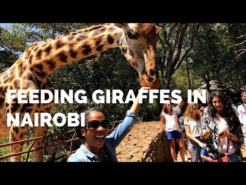 Feeding Giraffes in Nairobi