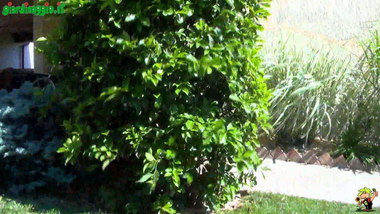 Come progettare un giardino soleggiato youtube for Progettare un salone