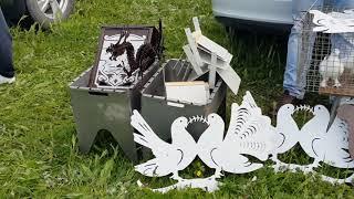 22.04.18. Выставка голубей Г Курганинск часть 4 заключительная.