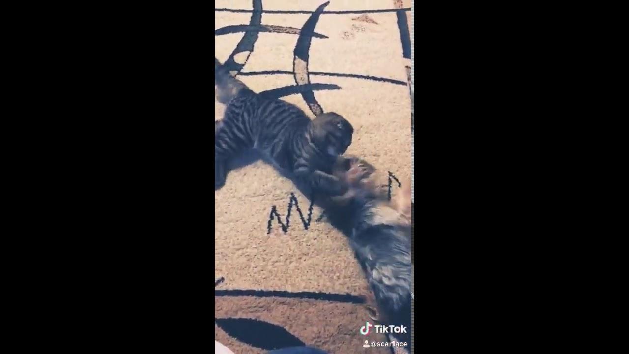 Хабиб VS Конор прикол (кошка и собака) - YouTube