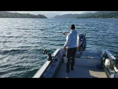 Lake Whatcom Kokanee
