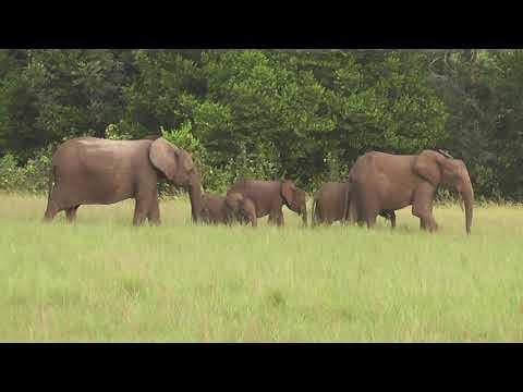 Tourism Gabon