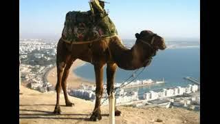 Песня на горе стоит верблюд!