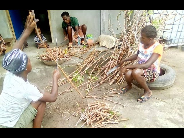 CASSAVA HELPING VILLAGES ADAPT TO CLIMATE CHANGE
