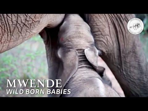 Mulika and her wild born baby