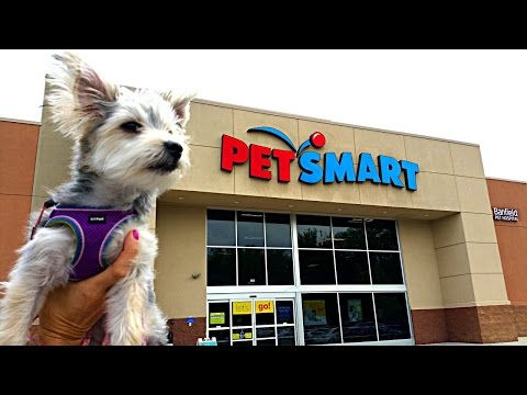 Zumi's New Haircut and Pet Store Visit - Puppy Toys, Clothes and Treats - DCTC Morkie