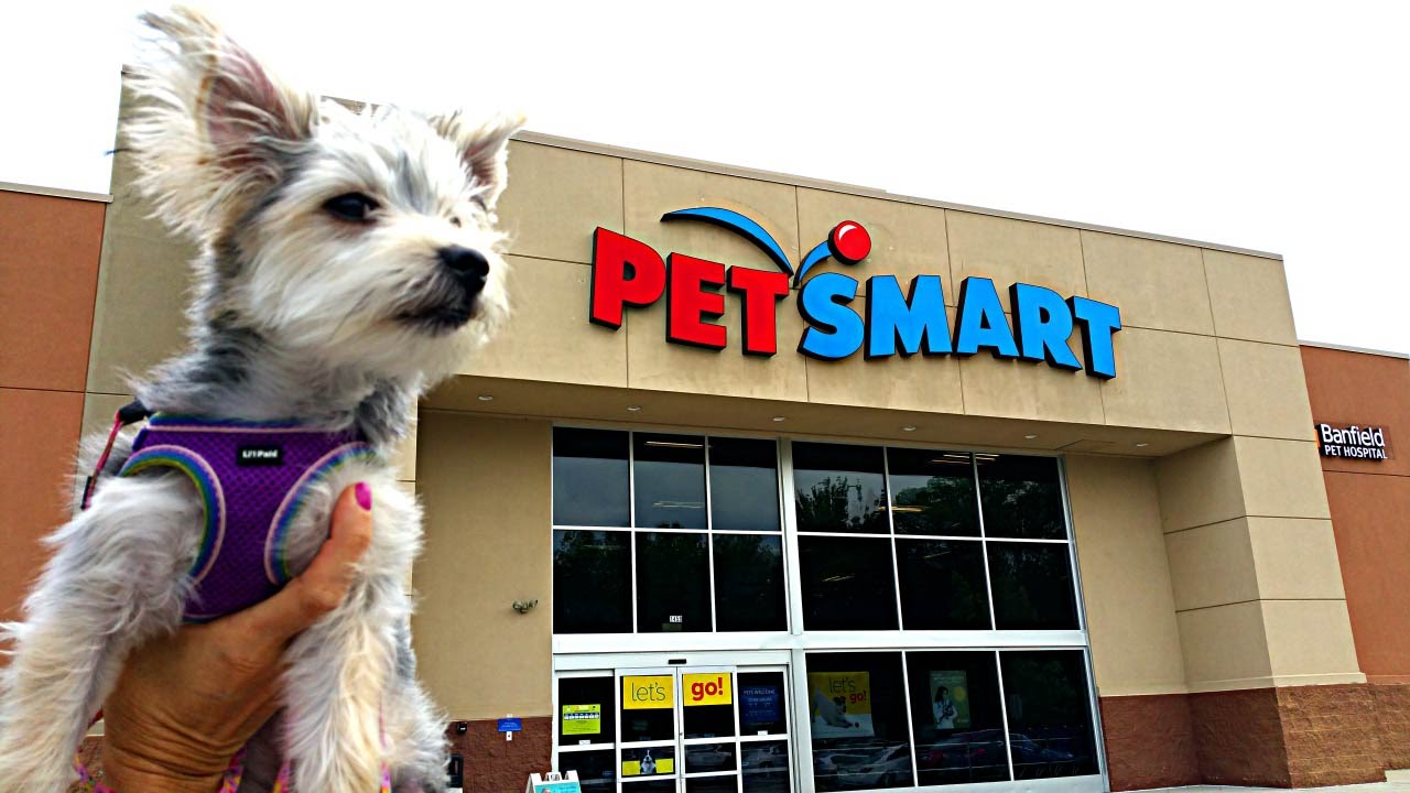zumi s new haircut and pet store visit   puppy toys