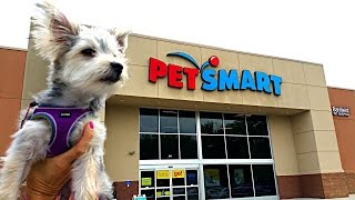 Zumi's New Haircut and Pet Store Visit - Puppy Toys, Clothes and Treats - DCTC Morkie(, 2016-05-20T19:30:01.000Z)