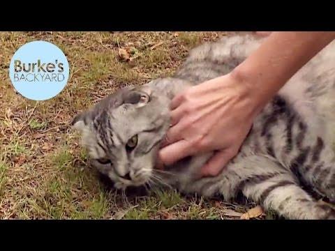 Burke's Backyard, Cat Behaviour Part 6 - Bonding