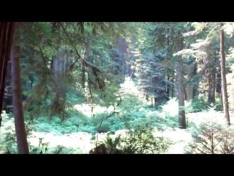 REDWOODS: DRIVE-THRU TREE