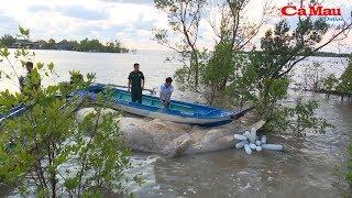 Cà Mau: Phát hiện xác cá voi khủng trên biển