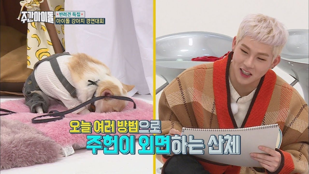 Download (Weekly Idol EP.336)Imaginative contest [반려견 상상화 대회O]