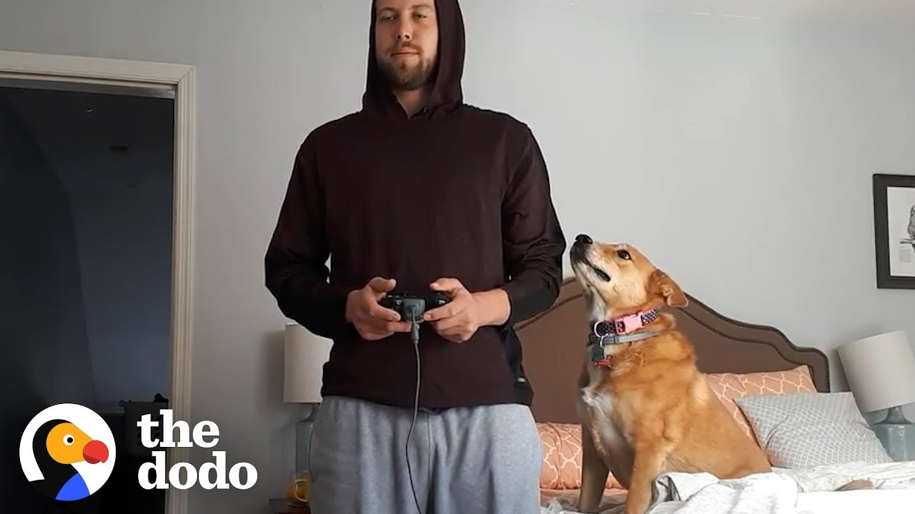Dog Doesn't Want Her Dad To Play Video Games | The Dodo