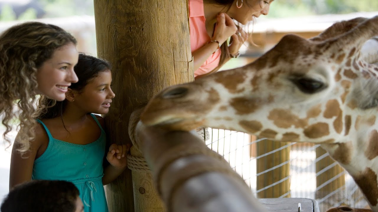 Kid-Friendly Summer Vacations: 3 of the Best Zoos Across