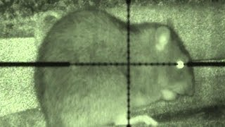 Budget night vision ratting