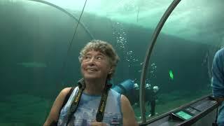Fisherman's Wharf Aquarium, 2009, San Francisco, California