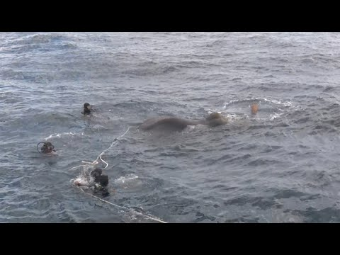 Elephants Rescued From The Middle Of The Sea