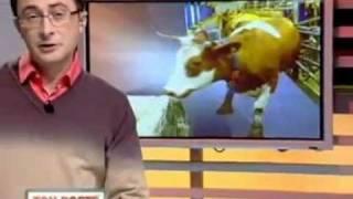 Ситуация с мясом все опаснее, коровы болеют лейкемией.