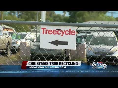 Christmas tree recycling begins Dec. 26th