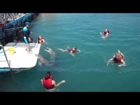 Swimming with the dolphins, Guardalavaca, Cuba